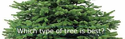 Types Of Christmas Tree How To Choose The Right Type