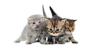 popular cat names popular cat names pet health care petpremium