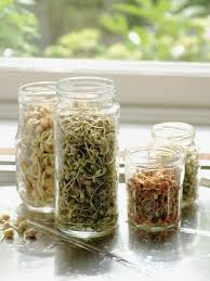 Sprouting Pumpkin Seeds by How To Sprout Seeds How Tos Diy