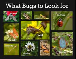 World Of Bugs – Backyard Guide | Bula Bug Backyard Buzzing Abhitrickscom Full Size Of Backyard Business Ideas Small Designs No Grass The Blog Stoneworx Buzzing Around The Beachside Honey Adorable Design That Can Be Decor With Green Journal Laetia Maklouf Cottage Months Ive Been Creating More Garden Rooms In Bkeepers Are Wlrn Intimate Backyard Wedding Flagstaff Az Sarah Armand Reasons People Never Use Their Archives Platinum