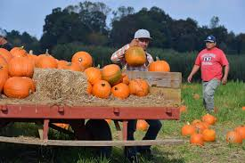 Myers Pumpkin Patch Facebook by 15 Places And Activities For Halloween Shenanigans This Month At