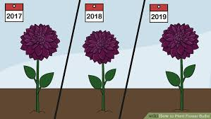 how to plant flower bulbs with pictures wikihow