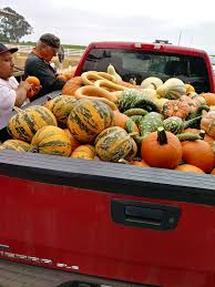 Pumpkin Picking Staten Island 2015 by Borchard Farms Temp Closed 47 Photos U0026 16 Reviews Pumpkin