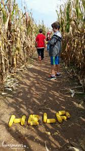 Great Pumpkin Patch Frederick Md by Summers Farm 6 Healthy Reasons To Visit Housewives