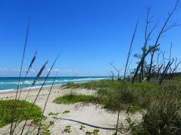 Bathtub Beach Stuart Fl by A Shell Of A Day At Blind Creek Beach St Lucie County Florida