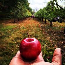 Best Pumpkin Apple Picking Long Island Ny by 17 Scenic Orchards To Go Apple Picking Around Nyc