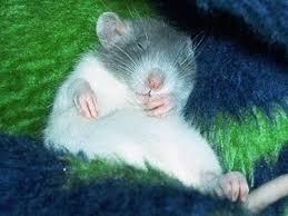 bedding litter