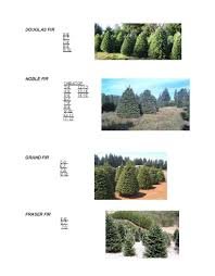 Christmas Tree Recycling East County San Diego by Evergreen Nursery Christmas Page 2012 Evergreen Nursery