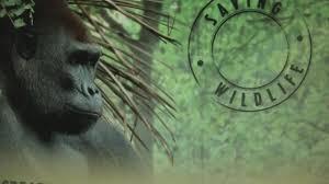 Bronx Zoo Halloween 2014 by Run For The Wild Bronx Zoo Abc7ny Com