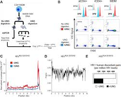 Standard Tile Rt 1 Edison Nj by Diverse Fates Of Uracilated Hiv 1 Dna During Infection Of Myeloid