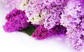 purple flowers backgrounds Roho 4senses