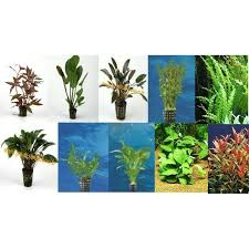 lot de 15 plantes en pot jm distribution