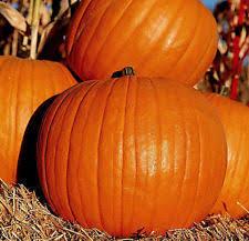 Connecticut Field Pumpkin For Pies by Pumpkin Vegetable Plant Seeds Ebay