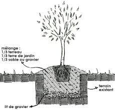 planter un olivier gamm vert