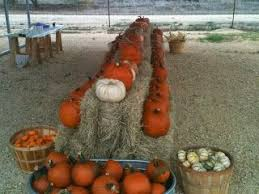 Medina Pumpkin Patch 2014 by 95 Best Fall In Texas Images On Pinterest Texas Pumpkin Patches