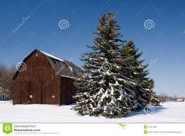 Winter Barn Pine Tree Scene Royalty Free Stock Photos - Image: 4547368 Weekend Getaway Guide Wooster And Wayne County Ohio Girl Pottery Barns Holiday Dcor Driven By Decor 101_0639jpg The Pine Tree Barn Flushing Mi Image Mag Barred Owl On Top Of A Pine Tree Wallpaper Animal Wallpapers Ol Dairy Christmas Farm Trees Old In Sunnyside Georgia 20 Small Towns You Should Be Spending Time This Fall Jones Family Best Images On Find The Perfect At Evans Whispering Pines Faux Lit Basket Au Willamsburg Festival Shreve Been There