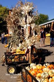 Rheault Farm Pumpkin Patch Fargo Nd by North Dakota Pumpkin Patches Corn Mazes Hayrides And