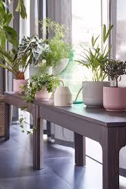 ein platz an der sonne für deine topfpflanzen ikea ikea