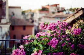 Flowers Italy And Morning Image