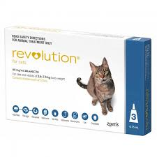 flea treatment for cats revolution flea heartworm treatment for cats revolution