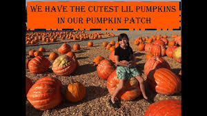 Del Oso Pumpkin Patch Lathrop Ca by Jaz Rides Train At Dell U0027osso Family Farms October 2017 Youtube