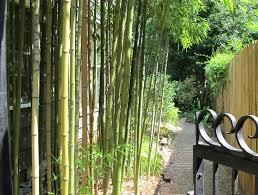 Live Bamboo Fence Design And Ideas Cooper House Garden loversiq