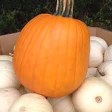 Free Pumpkin Patch Charleston Sc by Legare Farms Home Facebook
