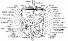 cat digestive system digestive system diagram digestive diseases