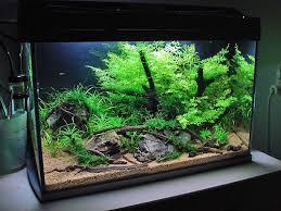Spongebob Aquarium Decor Set by 718 Best Aquarium Ideas Images On Pinterest Aquarium Ideas