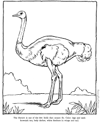 Ostrich Coloring Book Page