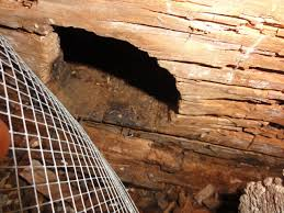 Floor Joist Jack Crawl Space by Replace Repair Rotten Rim Joist With Picture Building