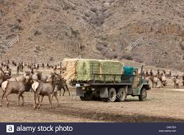 100 Feed Truck Stock Photos Stock Images Alamy