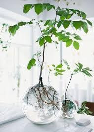 7 verschiedene wege zu zimmerpflanzen dekoration ideen im