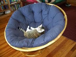 Papasan Chair Cushion Cover by Comfortable Rattan Papasan Chair With Blue Cushion On Wooden