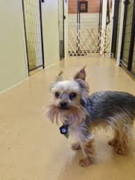 Bed And Biscuit Ithaca by Bed And Biscuit Pet Resort Llc