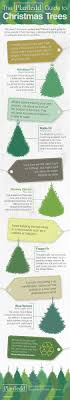 A Guide For Real Christmas Trees