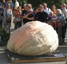 Largest Pumpkin Ever Grown 2015 by 2017 World Record 2323 7 Pound Giant Pumpkin Pictures From
