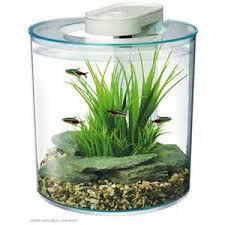 poisson d aquarium pour débutant micro poisson d aquarium liste