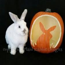 Can Bunny Rabbits Eat Pumpkin Seeds by Obsessed Bunny Mom Carves Pet Rabbit Into Pumpkin Rabbits