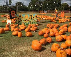 Pumpkin Patch Tampa 2014 by 20 Central Florida Pumpkin Patches And Corn Mazes To Put You In