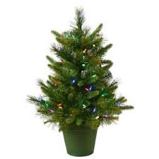 Potted Christmas Tree by Potted Christmas Trees You U0027ll Love Wayfair