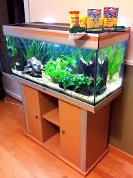 aquarium d eau douce débuter avec un aquarium d eau douce choix du bac type de