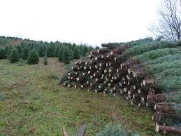 Christmas Tree Baler For Sale by Oh Christmas Tree Farmgirl Bloggers