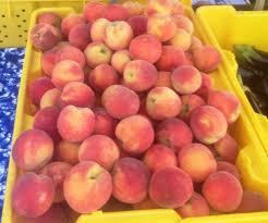 Best Apple Hill Pumpkin Patch by The Meadowlark Farm Pick Your Own Apple Orchard U0026 Pumpkin Patch