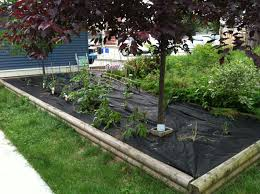 Good Backyard Vegetable Garden : Outdoor Furniture - Best Ideas ... 38 Homes That Turned Their Front Lawns Into Beautiful Perfect Drummondvilles Yard Vegetable Garden Youtube Involve Wooden Frames Gardening In A Small Backyard Bufco Organic Vegetable Gardening Services Toronto Who We Are S Front Yard Garden Trends 17 Best Images About Backyard Landscape Design Ideas On Pinterest Exprimartdesigncom How To Plant As Decision Of Great Moment Resolve40com 25 Gardens Ideas On