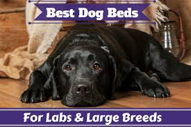 Extra Large Orthopedic Dog Bed by The Best Dog Beds For Labs And Large Dogs In 2017 Reviewed