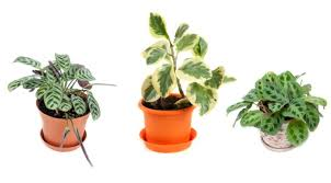 Best Plant For Your Bathroom by Re Bath Of The Triad Bathroom Plants What Are The Best Plants For