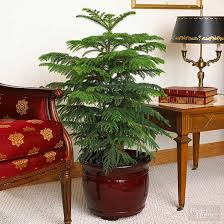 Small Plants For The Bathroom by Indoor Plants For Low Light