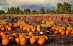 Pumpkin Picking Corn Maze Long Island Ny by Event Round Up The Best Halloween Activities In Nyc 6sqft