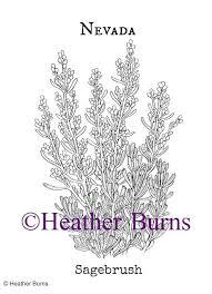 Nevada State Flower Sagebrush Coloring Page